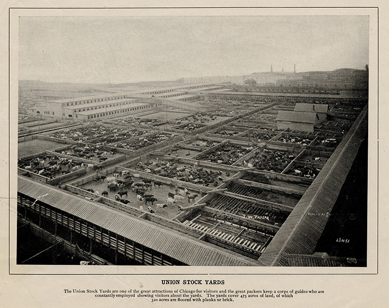 Union stockyards from 'Views of Chicago and Vicinity.' pic 2 Description: Union stockyards from 'Views of Chicago and Vicinity;' Chicago, IL. Source: ICHi-52217. Chicago History Museum. Reproduction of photomechanical print, printer unknown. Date: 1890-1899.